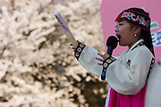 Yeouido Island. Hundreds of Thousands of Seoulites enjoy the Cherry Blossom in Yunjungno, the street around the National Assembly lined by cherry trees which has been cleared from traffic for these days. Traditional Korean singers on a stage in front of National Assembly building.