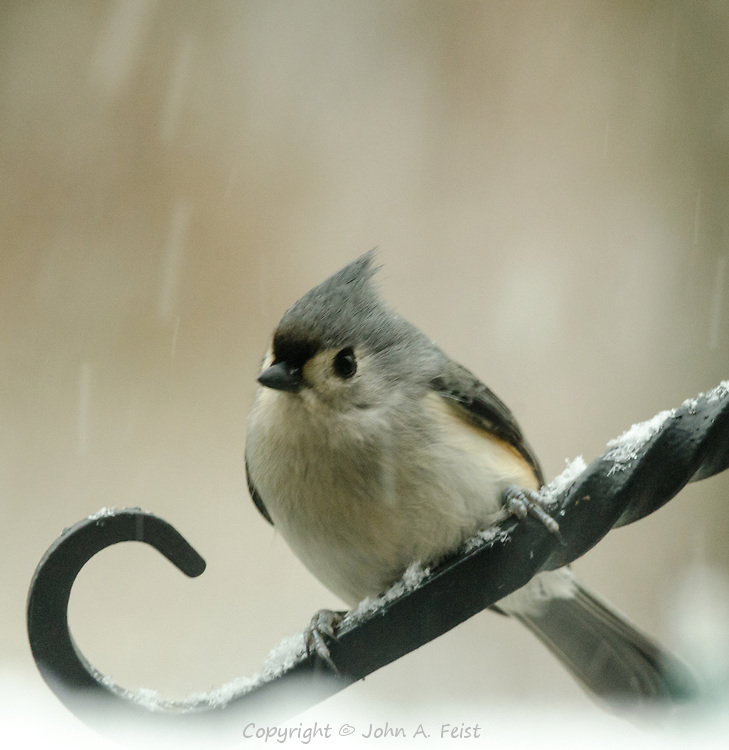 These little birds have wonderfully expressive faces.  This little guy is just huddling down against the cold and snow
