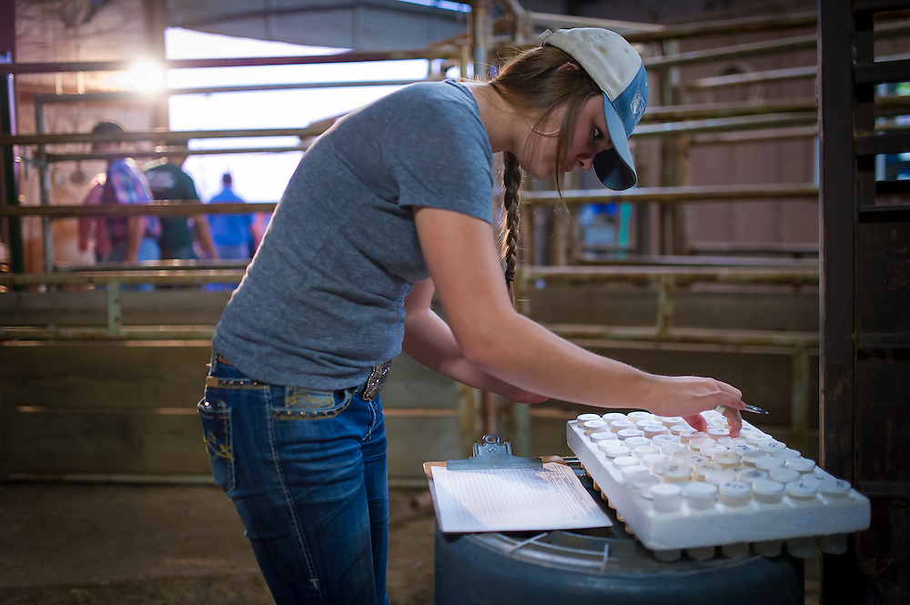 Beef Cattle milk production research being conducted at the Okstate Animal Science Range Cow Research center South Range west of Stillwater Oklahoma. investigators are Corbit Bayliff and Dr. David Lalman of OSU Animal Science.