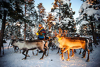Coral hand Jakob about to feed a herd of reindeer