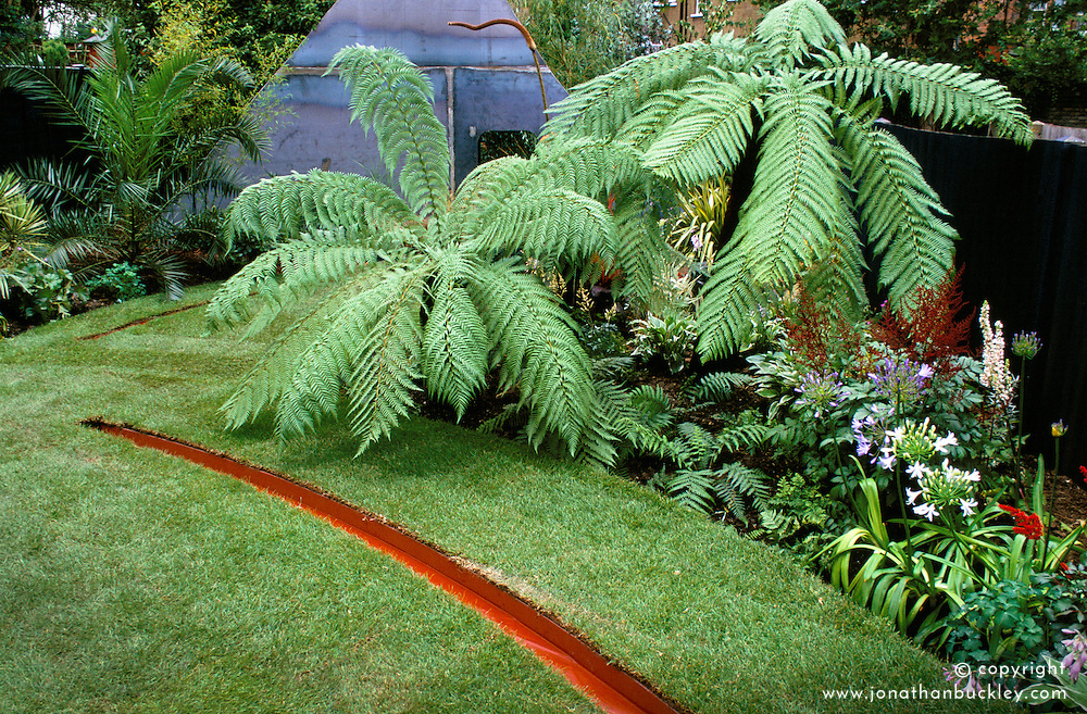 Rill water feature inset into curving lawn. Planting of tree ferns - Dicksonia antarctica.