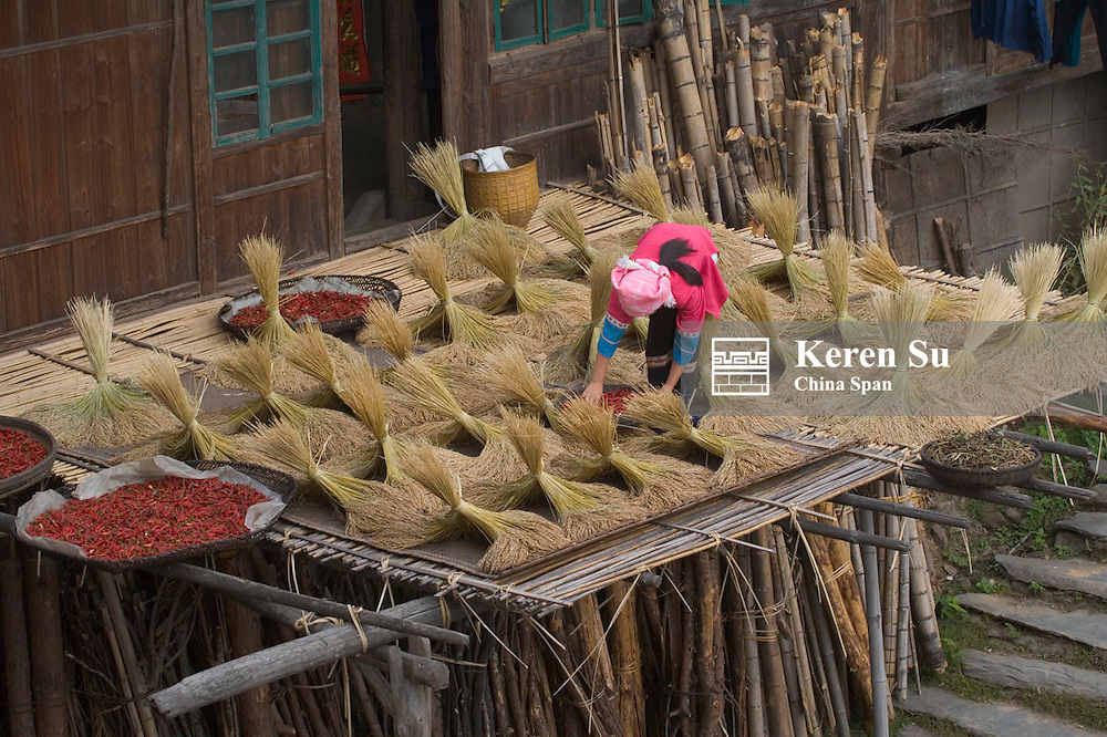 Zhuang girl drying rice bundles and red chili outside traditional wood house, Guangxi, China