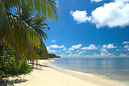 Des Roches, The Seychelles<br /> beach, sea, and palm trees<br /> c. Ellen Rooney