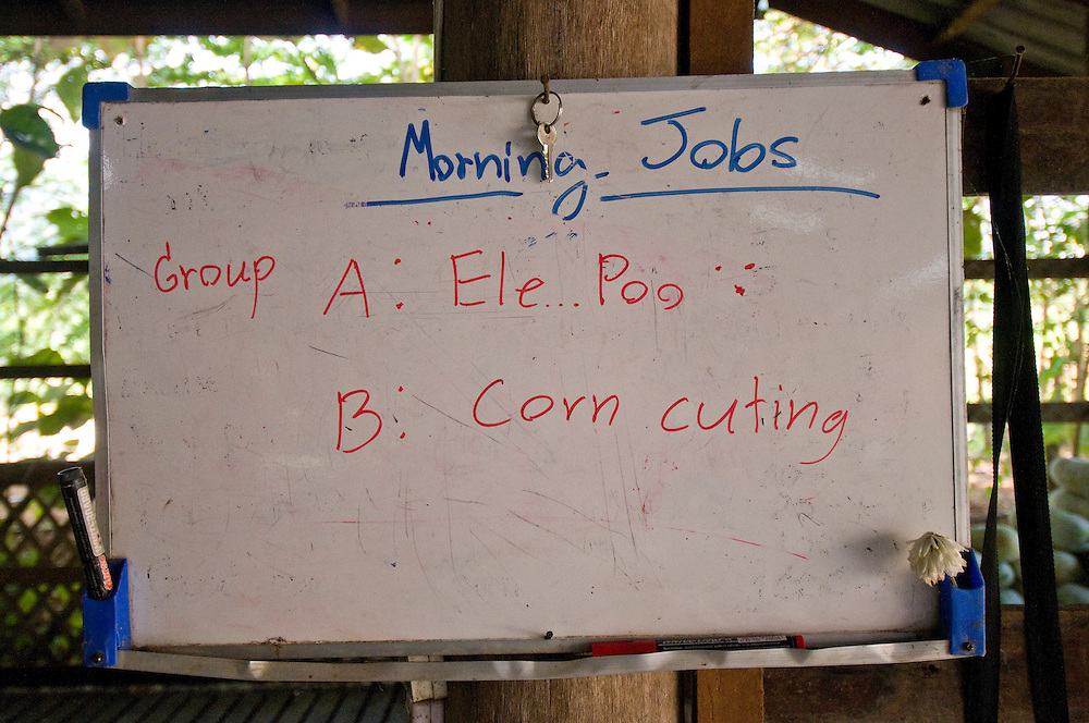 "Morning jobs for volunteers in Group A cleaning up ""Ele Poo"" and group B cutting corn at the Elephant Nature Park near Chiang Mai, Thailand.  Sangduen ""Lek"" Chailert founded the park as a sanctuary and rescue centre for elephants.  The park currently has 32 elephants sponsored and supported by volunteers from all over the world."
