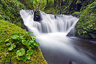 Lower Gorton Creek Falls - Columbia River Gorge National Scenic Area