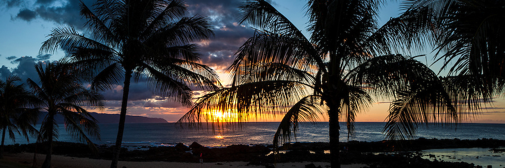 Palm trees silhouetted at sunset on Shark's Cove, North Shore, Oahu, Hawaii