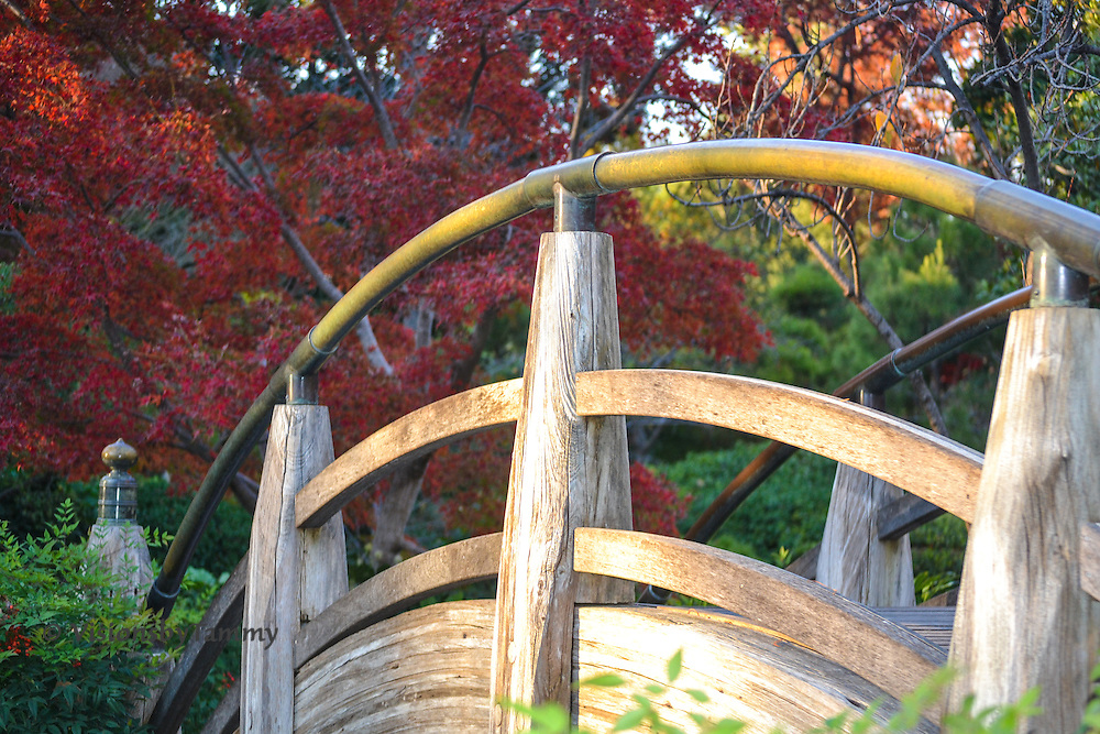 Moon Bridge at The Japanese Gardens in Fort Worth, TX