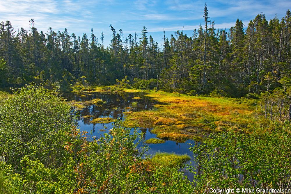 Wetland at entrance to Atlantic Ocean, Marie Joseph, Nova Scotia, Canada