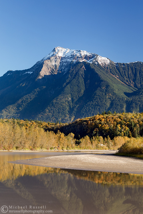 Mount Cheam and the Fraser River in Agassiz, British Columbia, Canada. The majority of the trees providing fall foliage along the banks of the Fraser River are Black Cottonwood (Populus trichocarpa).  The colorful trees on the hill in the middle of the photo are predominantly Bigleaf Maples (Acer macrophyllum).
