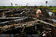 The rain forest in Sumatra is disappearing fast. In Riau the forest is moved down, torched and replaced with palm trees to make palm oil...