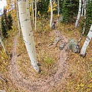 Heather Goodrich rides autumn Singletrack on Teton Pass in Wyoming. Philip's Ridge Trail.