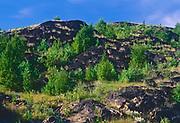 Reclaimed landscape with pine saplings (1999). Coniston<br /> Greater Sudbury<br /> Ontario<br /> Canada<br />Greater Sudbury<br />Ontario<br />Canada