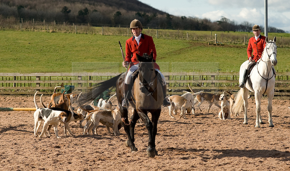 © Licensed to London News Pictures. 10/03/2012..Cleveland, England..As the Cleveland Hunt prepares to leave Thrushwood Farm on Teesside at the start of the hunt the hounds are brought into the paddock before the hunt sets off...Photo credit : Ian Forsyth/LNP
