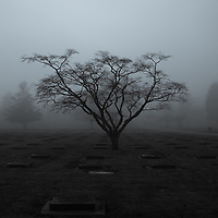 Trees and headstones in a foggy cemetery.
