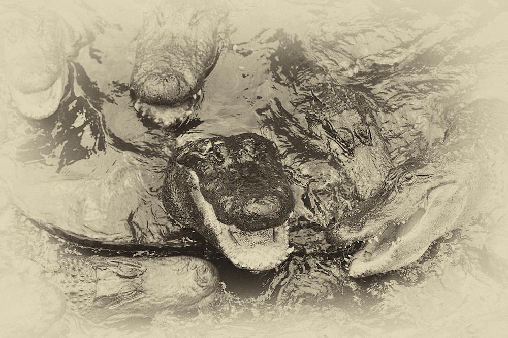 Antique Platnium crocs