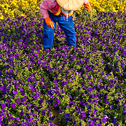 Worker in traditional Chinese hat weeds  in Aozhidi Metro park, Kaohsiung City, Taiwan
