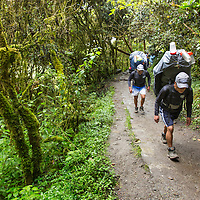 Peru, Piscacucho, Porters carrying load of backpacker's gear through rainforest near base of Dead Woman's Pass along Inca Trail to Machu Picchu along Urubamba River