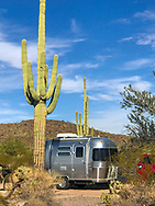 A camper trailer parked beside a large saguaro cactus at a campsite in Organ Pipe Cactus National Monument, Arizona.