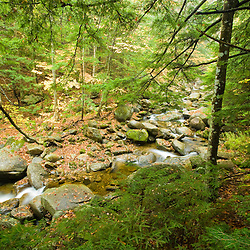 A tributary of the Baker River flows through a hemlock forest in Groton, New Hampshire.