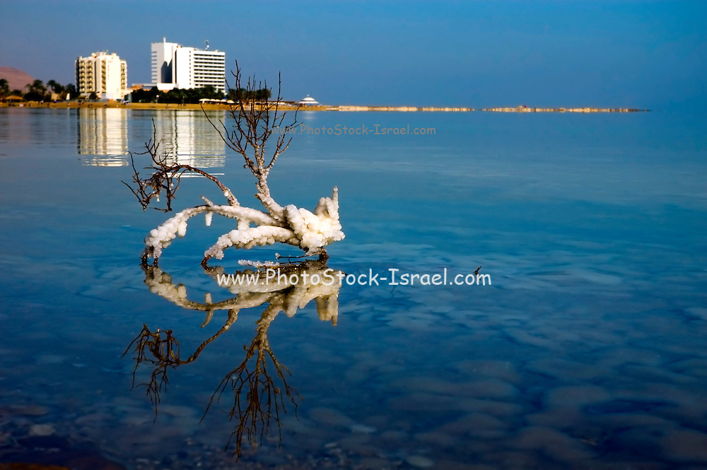 Israel, Dead sea, salt formation caused by the evaporation of the water The resort hotels can be seen in the background