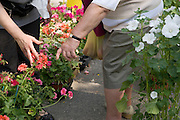 woman looking at a flower she intents to buy at an outdoor flower market