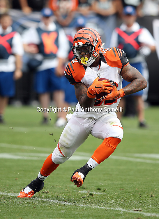 Cincinnati Bengals running back Jeremy Hill (32) dodges a defender as he runs for a 3 yard touchdown and a 7-0 first quarter Bengals lead during the 2015 NFL week 1 regular season football game against the Oakland Raiders on Sunday, Sept. 13, 2015 in Oakland, Calif. The Bengals won the game 33-13. (©Paul Anthony Spinelli)