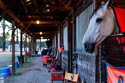 March 22, 2019 - Raeford, North Carolina, US - March 23, 2019 - Raeford, N.C., USA - A horse peers out of a stall at the sixth annual Cloud 11-Gavilan North LLC Carolina International CCI and Horse Trial, at Carolina Horse Park. The Carolina International CCI and Horse Trial is one of North AmericaÃ•s premier eventing competitions for national and international eventing combinations, hosting International competition at the CCI2*-S through CCI4*-S levels and National levels of Training through Advanced. (Credit Image: © Timothy L. Hale/ZUMA Wire)