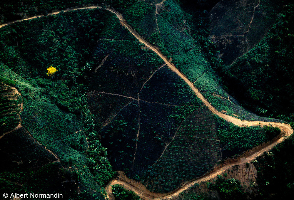 Yellow tree and winding road in mountains, aerial