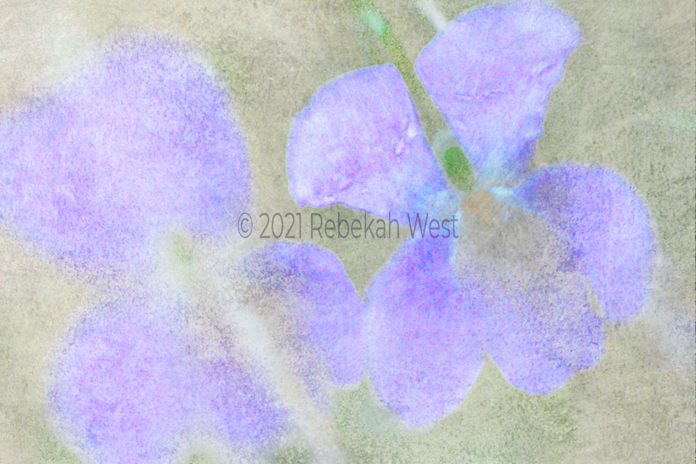 two whimsical purple flowers super close up in horizontal field sot watercolor red violet, green accent on center of right hand flower, background soft grey gray green, greenery underlayer and overlayers, greenery, flower art, feminine, high resolution, licensing, iridescent, horizontal, 2503 x 1670