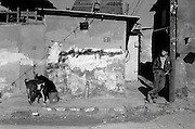 Jabalya Refugee Camp, Gaza 1988. Youth leaning against graffiti covered wall as goats feed on garbage.