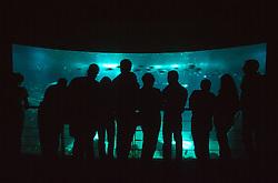 PORTUGAL LISBON MAY99 - Visitors at the Oceanario at the Expo site.....jre/Photo by Jiri Rezac....© Jiri Rezac 1999....Tel:   +44 (0) 7050 110 417..Email: info@jirirezac.com..Web:   www.jirirezac.com