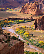 0100-1008  ~  Copyright: George H.H. Huey ~ Canyon de Chelly, autumn, with cottonwood trees.  Canyon de Chelly National Monument, Arizona.