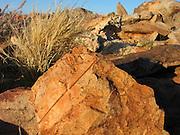 Middle Eocene Silcrete Fossil Leaf - South Australia