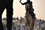The arrival of the 10th edition camels race of the Festival au Désert, Timbuktu.