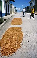 Secado de Cacao en la calle del pueblo. Después de fermentados, los granos son colocados al sol por unos cuatro o cinco días, tiempo en que se ponen rojizos u oscuros. Cabe destacar que para la elaboración del chocolate son indispensables las semillas de cacao. San Juan de las Galdonas. 2002 (Ramón Lepage / Orinoquiaphoto)  Dried Process of Cocoa in the streets of a small town. After fermented, the grains are placed to the Sun for approximately four or five days, time in which they become reddish or dark. It's necessary to emphasize that for the elaboration of the chocolate the cocoa's seeds  are indispensable. San Juan de las Galdonas. 2002. (Ramon Lepage / Orinoquiaphoto)