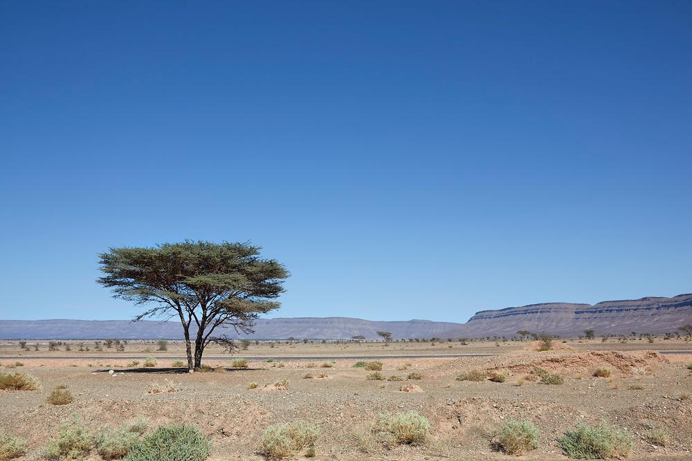 Desert landscape with Acacia tree and mountains near Tagounite, Sahara desert, Morocco.