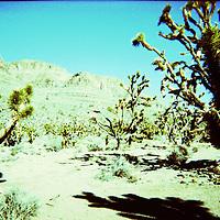 A desert scene with cactus plants