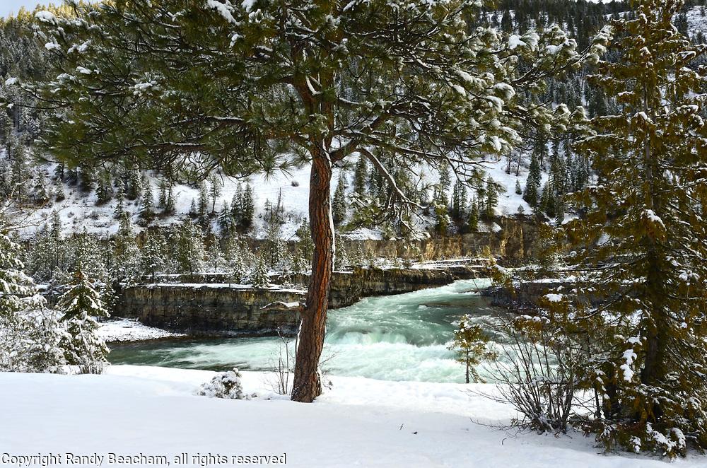 Kootenai Falls and a ponderosa pine at sunrise in winter 2016-2017. Kootenai River Valley in Lincoln County, northwest Montana.