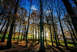 A deciduous wood in autumn in the Scottish Borders<br /> <br /> (c) Andrew Wilson | Edinburgh Elite media