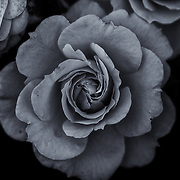 &quot;Last Survivor&quot; monochrome<br />