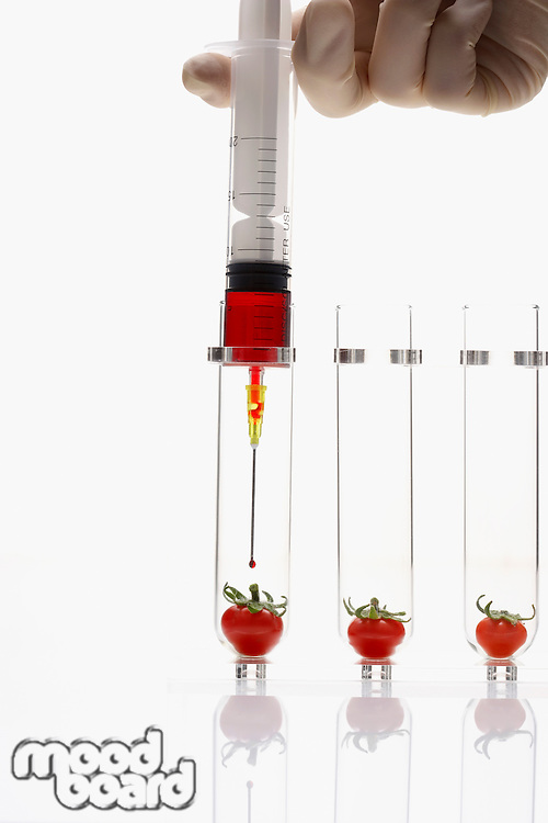 Person injecting tomatoes in test tubes