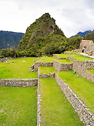 Llamas graze at the Incan ruins of Machu Picchu, near Aguas Calientes, Peru.
