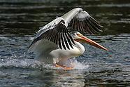 Shorebirds & other Waterfowl
