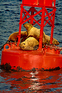 seals on navigation bouy