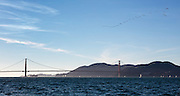 Pelicans fly over Golden Gate Bridge in San Francisco Bay