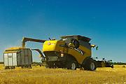 harvesting 2 row barley<br /> near Fairlight<br /> Saskatchewan<br /> Canada