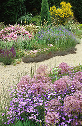 The gravel garden with Allium cristophii and Linum narbonense in the foreground