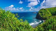 Pololu Valley and beach through hala trees, North Kohala, The Big Island, Hawaii USA