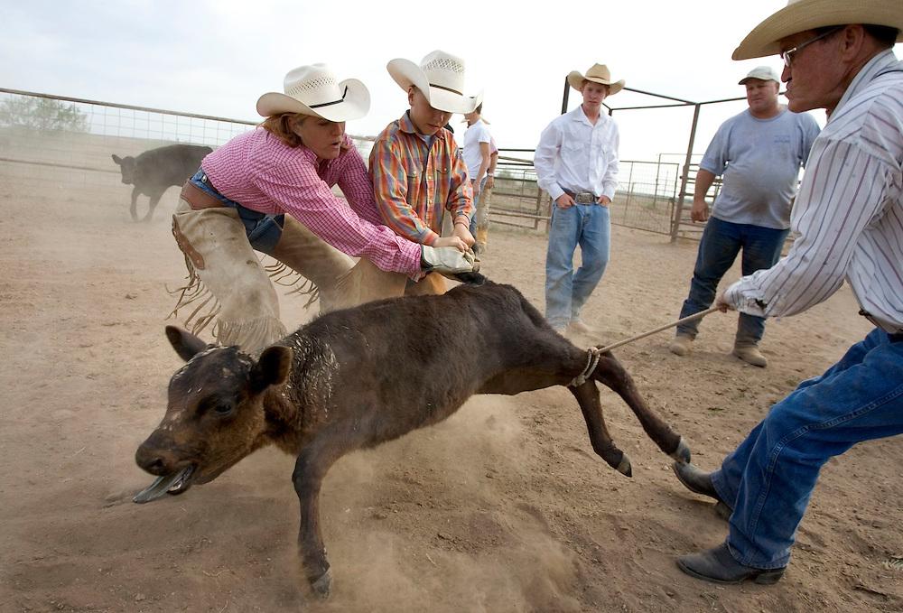 Lazy U cattle drive