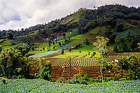 Indonesia, Sulawesi, Rurukan. Agriculture in the Rurukan area not far from Tomohon in the Minahasa highland.